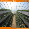 Film Covered를 가진 긴 생활 Span Vegetable Planting Helio-Greenhouse