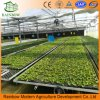 安い価格の伝送のVenloの高い屋根のガラス温室