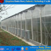 토마토를 위한 중국 공장 PC 장 Hydroponic 온실