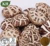 Le renforcement de l'immunité polysaccharide extrait de champignons Shitake