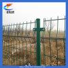 Rete fissa della rete metallica della Cina (CT-Recintare)