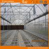 현대 디자인 시딩을%s 다중 경간 필름 온실