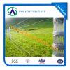 Rete fissa galvanizzata tuffata calda del campo dell'azienda agricola/rete fissa del pascolo Fence/Cattle