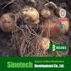 Condicionadores do solo do floco 90% de Humate do potássio