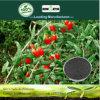 Il carbonio produttivo di aumento di Kingeta ha basato il fertilizzante composto NPK 18-6-18