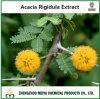 Extrait normal d'écorce de Rigidula d'acacia de 100% avec l'analyse d'alcaloïde
