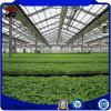 Feuille de verre/PC/Tuyaux en acier galvanisé de film plastique maisons vertes