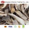 Hochwertige gefrorene geschnittene Auster Mushtoom