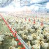 Equipamento automático das aves domésticas da alta qualidade do jogo cheio para a casa da exploração avícola