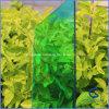 زجاجيّة خضراء زخرفيّة فحمات متعدّدة لوح