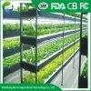 Крупных сельскохозяйственных стекла Венло выбросов парниковых газов для винограда и помидоры и огурцы и другие овощи