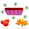 Power eccellente Red&Blue 864W Hydroponic LED Grow Light