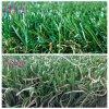 New Grass Landscape Popular in Australia & Canada