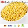 Grains superbes de maïs d'IQF avec le bon prix