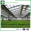 Jardin/agriculture des Chambres vertes en verre de tunnel pour horticulture de légume/