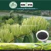 L'agente microbico del carbone di legna di bambù del fertilizzante di Kingeta contiene l'efficace carbonio