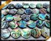 Плоские шарики монетки, ювелирные изделия раковины Abalone отбортовывают оптом (APS018)