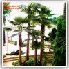 Пальма вентилятора поставщиков Китая искусственная с хоботом стеклоткани