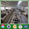 搾り出すパーラーが付いているプレハブの現代牛舎
