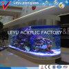 Cilindro acrílico bonito do tanque de peixes grande