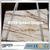 Pedra dourada do mármore do dragão do material de construção para a vaidade/bancada do banheiro