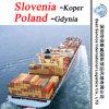 Agente de transporte Koper de China (Slovenia); Gdynia (Poland) - recipiente de FCL & de LCL