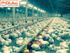 Sistema de aumento del suelo del pollo tomatero de la avicultura