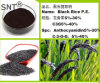 Extrait de la Poudre de Riz Noir Anthocyandins 25 %