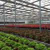 De commerciële Serre van het Glas van het Leven van de multi-Spanwijdte Lange voor Bloemen
