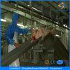 Горячие продавая оборудования машины Slaughtering свиньи