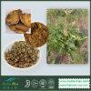 Выдержка ревеня 100% естественная (эмодин 98%)