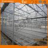 Serra poco costosa della pellicola della Multi-Portata per la piantatura di verdure