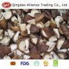 Quarto congelato superiore del fungo di Shiitake