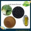 Extrato natural da semente do alho-porro de 100%
