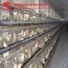 2016 camadas automáticas cheias da gaiola da galinha da venda quente/grelha/franga