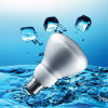 Ampoules économiseuses d'énergie de la CE R80 (BNF R80)