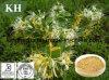 Le chèvrefeuille pur et naturel extrait de fleur de 5 % de l'acide chlorogénique HPLC
