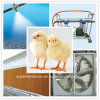 Sistema di controllo ambiente automatico della strumentazione di allevamento di pollame