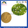 Fabricant de certificat d'alimentation extrait de racine de pissenlit en poudre
