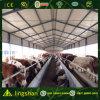 Скотоводческое хозяйство структурно конструкции (L-S-055)