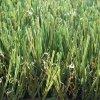 Chinees-gemaakt Kunstmatig Gras met het Garen van de Hoogte van 30mm