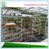 식물성 성장하고 있는 지적인 유리제 온실