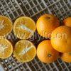 Chinês exportado padrão Fresh Valencia Orange
