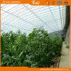 La production de haute Solar Green House pour de plus en plus de fraises