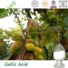 Галловая кислота выдержки 99% Galla Chinensis
