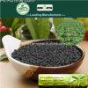 Il carbonio di Kingeta ha basato il fertilizzante composto NPK 8-6-18 per la verdura