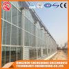 꽃을%s 중국 상업적인 다중 경간 유리제 온실