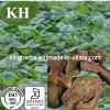 Extraído de Emodin Rhubarb / Radixet Rhizoma Rhei de Qualidade Superior e Emulsão 50%, 90%, 98%