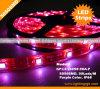 IP68 impermeabilizzano 5050SMD, striscia flessibile delle strisce LED di 30LEDs/M LED