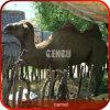Kamel-lebensgrosses Tierbaumuster